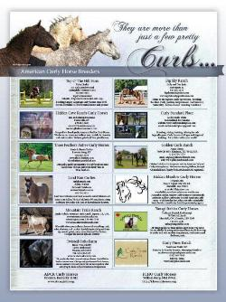 August 2013 Your New Horse Magazine