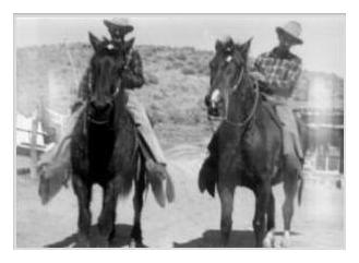 a discussion about the american bashkir curly horse My hair is stick straight so of course i'm drawn to the curlies north american curly horses or american bashkir curly horses or american curly horses or curly horses after much discussion among curly historians.