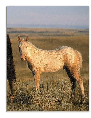 colt owned by Gordon Plain Bull